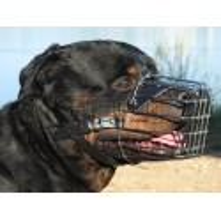 Botnita Rottweiler & Dog German
